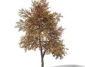 mountain Mountain Ash 3D Model 5m