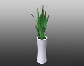 Snake plant - Sansevieria trifasciata pot plant 3D model
