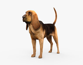 3D model Bloodhound HD