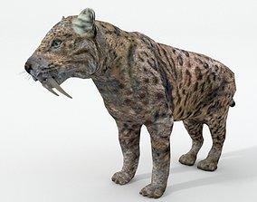 3D asset Saber-toothed Tiger