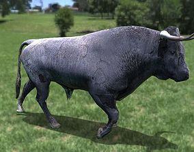 3D asset Toro Bravo