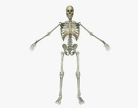 3D Male Human Skeleton