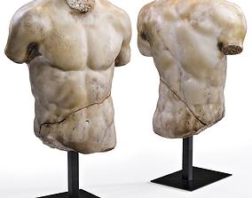 3D DISCOPHORUS TORSO