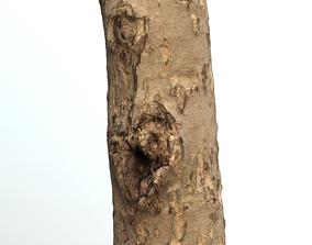 Thin apple tree trunk 3D asset