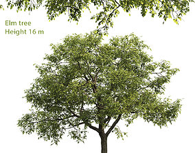 3D model Elm-tree 02 H16m