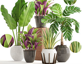 Collection of plants elegans 3D model