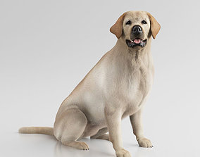 Labrador Retriever 3D model