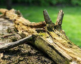 3D asset Dead tree branch on floor
