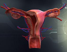 Human Female Organ Anatomy 3D model