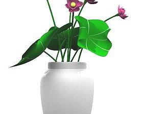 Nymphea Hoa San 3D