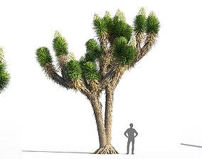 Joshua tree 3D model