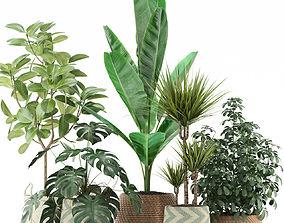 Plants collection 116 3D