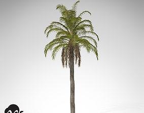 3D model XfrogPlants Queen Palm