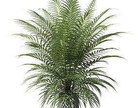3D model Palm tree in concrete pot