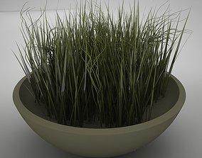 plant living 3D model