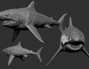shark 3D model game-ready animals