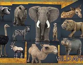 3D asset VR / AR ready WILD AFRICA PACK