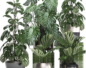 3D potted Collection Exotic plants Monstera 2