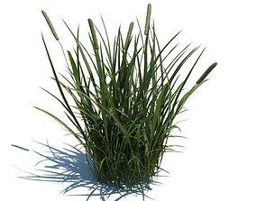 tree 3D Tall Green Grass
