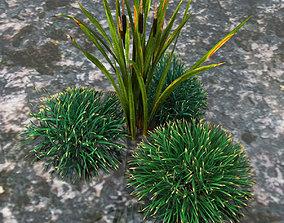 Grass bush 3D model