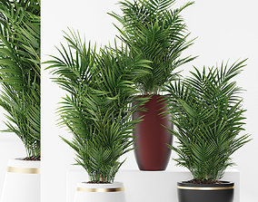 plants 264 3D