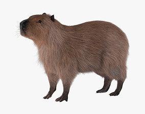 3D model Capybara