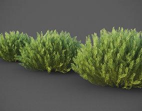 XfrogPlants California Sagebrush - Artemisia 3D model