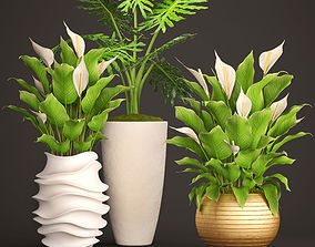 Spathiphyllum plant 2 3D