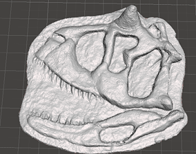 carnotaurus skull 3D printable model