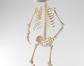 3D child skeleton