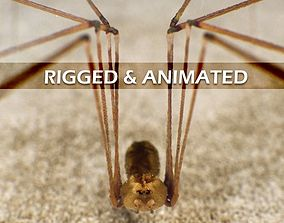 Spider Pholcus Phalangioides Rigged 3D model