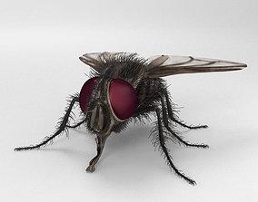 Housefly High Detailed 3D model