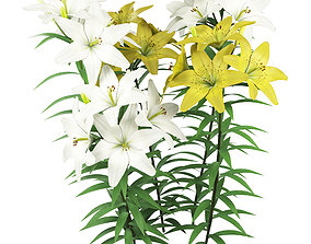 Lilium yellow and white 3D model