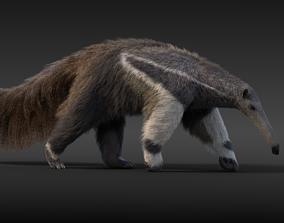 3D Giant Anteater