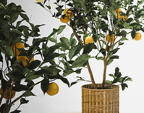 3D Tangerine flora
