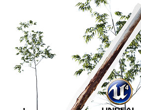 animated Realistic Tree 14- UE4 Asset and FBX Files 2