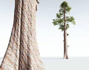 3D EVERYPlant Coastal Redwood 12 --12 Models--