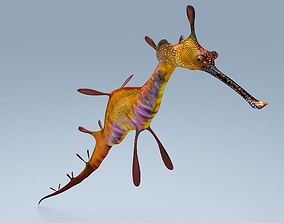 3D model Sea Dragon Syngnathussp