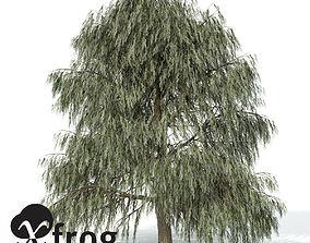 3D model XfrogPlants Weeping Willow