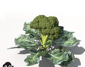 XfrogPlants Broccoli 3D