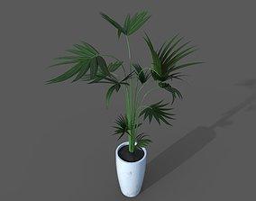 3D asset Kentia palm pot plant