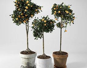 Orange Trees set 01 3D