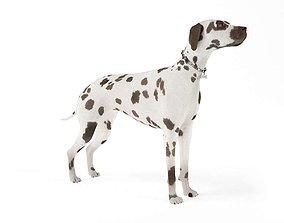 3D model Dalmation Dog