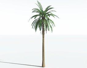 EVERYPlant Date Palm SINGLE --1 Model--