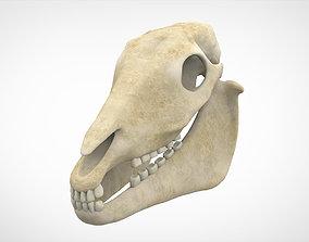 Horse Skull 3D model