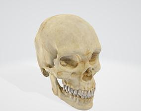 3D head body Skull
