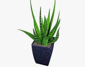 3D Aloe in a pot