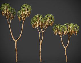 XfrogPlants Doum Palm - Hyphaene Thebaica 3D