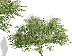 3D model Set of Aralia elata or Japanese angelica Trees 2