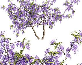 tree Fabaceae - Wisteria sinensis 3 3D